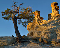 Pulpit Rock Hoodoos